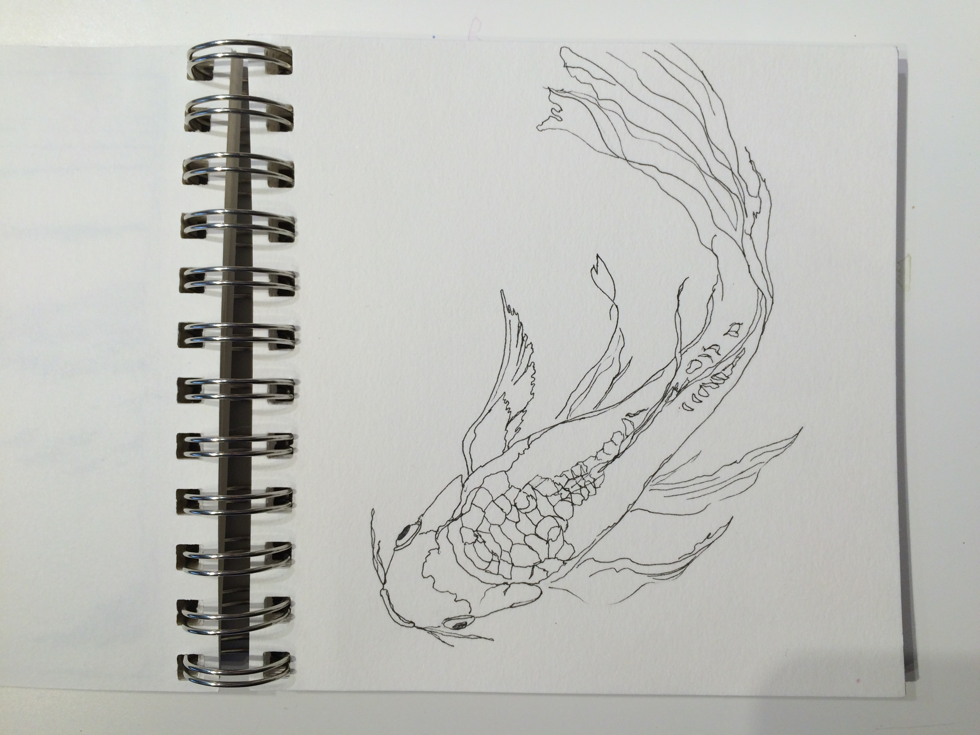 Butterfly koi sketch.